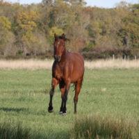 cheval qui court